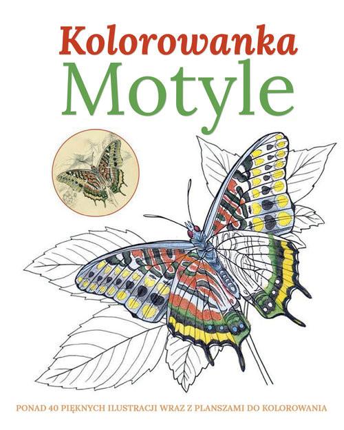 okładka Motyle Kolorowanka, Książka | Praca Zbiorowa