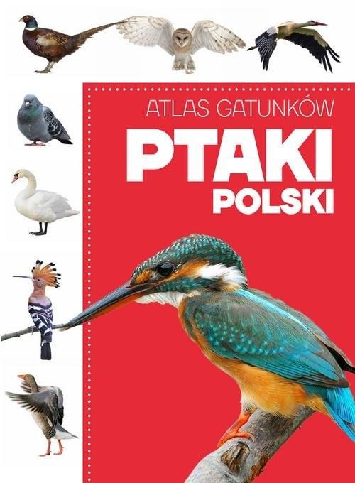 okładka Atlas gatunków Ptaki Polski, Książka |