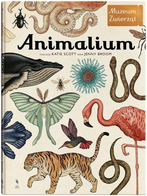 okładka Animalium. Muzeum zwierząt, Książka | Broom Jenny