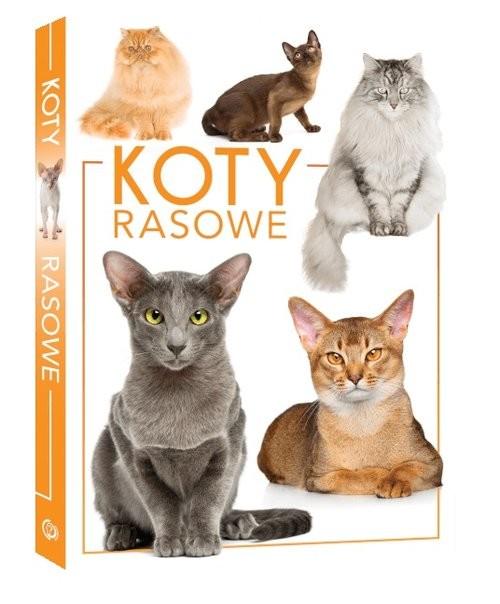 okładka Koty rasowe, Książka | Opracowanie zbiorowe