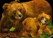 okładka Niedźwiadek, Książka  